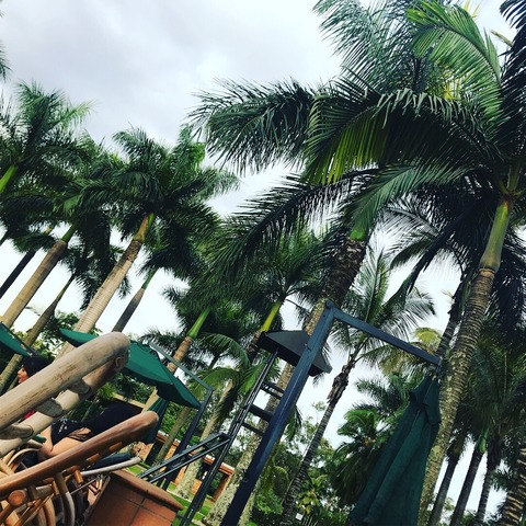Munyonyo poolside with palm tree
