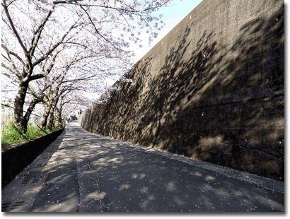 武岡下公園の桜02