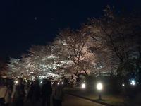 植物園ライトアップ