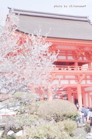 上賀茂神社 (1)