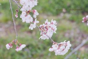 植物園04 (13)