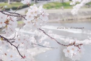 賀茂川 (4)