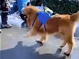 「犬を散歩させないでください。見つけたら一律に殴り殺します」 武漢でのアナウンスに世界が衝撃