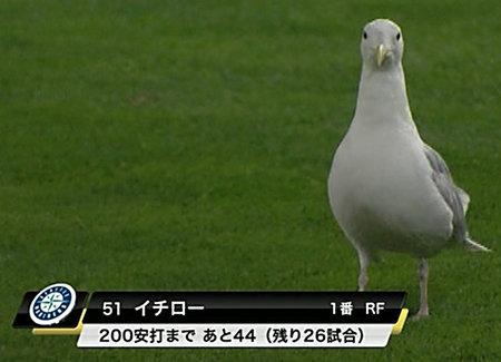 ichiro-pigeon