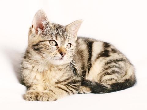 cat-1192026_1280