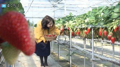 川北円佳/やさしいニュース「金どこ!?イチゴ狩り 農園紀の国」20190201