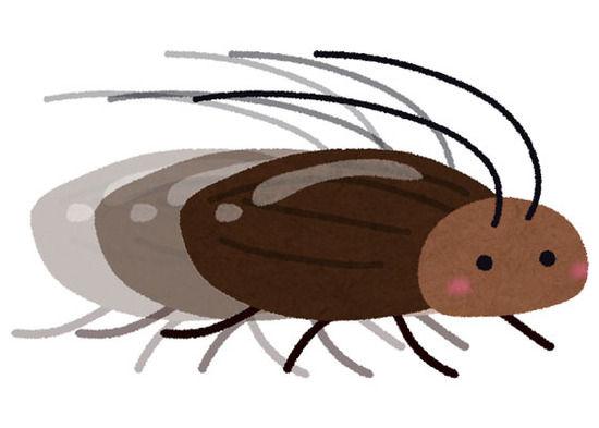 【画像】ゴキブリ、黒くなければ可愛い事が判明!あの色が問題だった模様