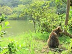 池に11匹の猫の死骸、名古屋 愛知県警が捜査