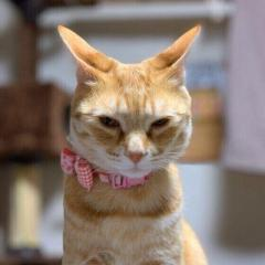 愛猫はどんな時に「イカ耳」になる?猫が「イカ耳」する理由