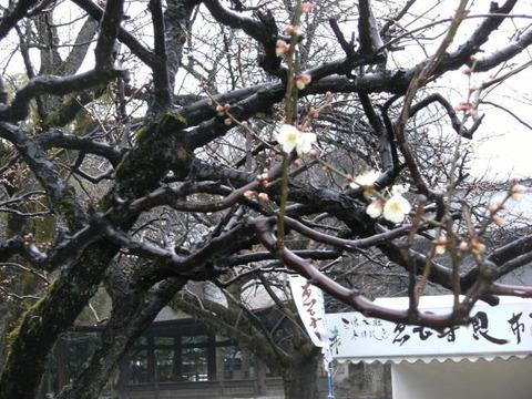 photo031mishima