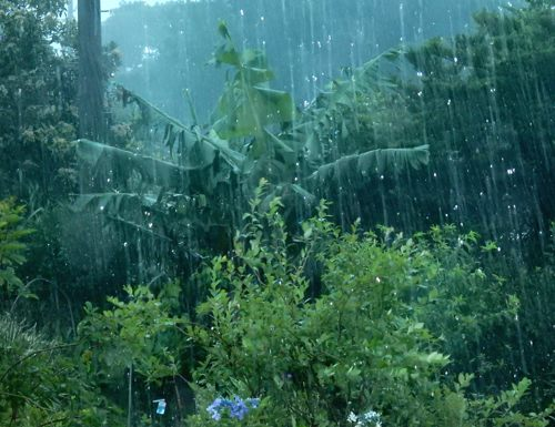 が 強い 雨脚