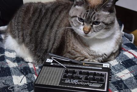 stylophone genX-1 & cat