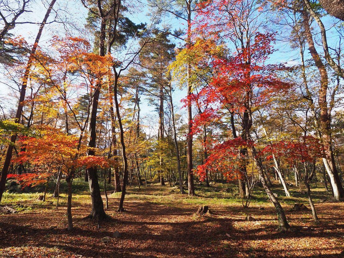 林 自然 林 水