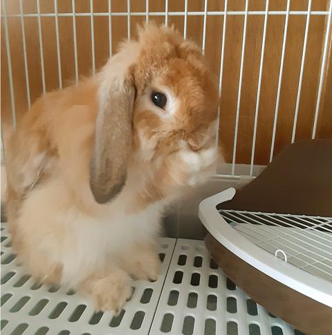 福田さん写真3ウサギ補整