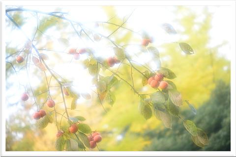 柿の実シルキーフィルター