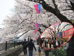 桜と屋台合