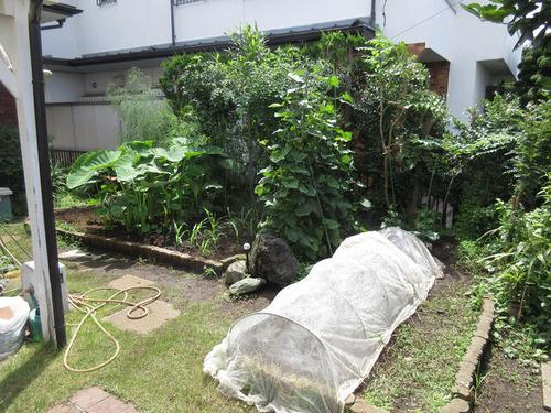 IMG_6025白菜種植植付適