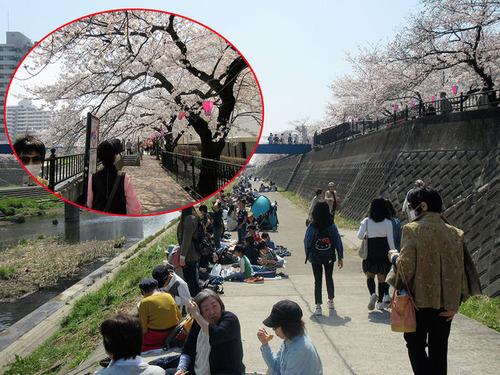 大勢の花見客と桜