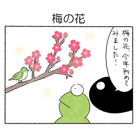梅_001