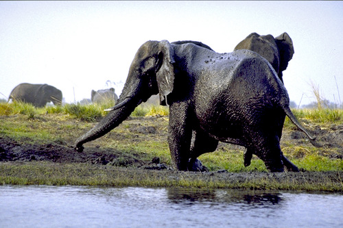 7 ナムビア側の岸辺で泥遊び