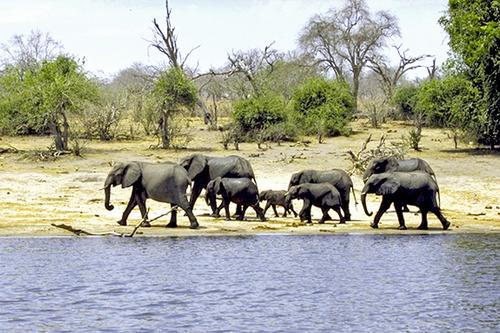 5 IMG0020 チョベの象