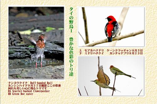 20番タイの野鳥1