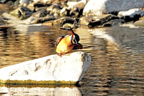 2月3日池の外ドジョウ