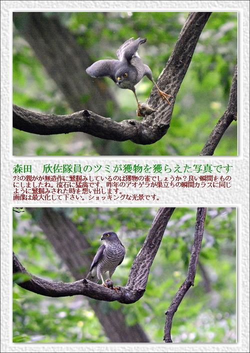 森田さん7月のツミの写真です