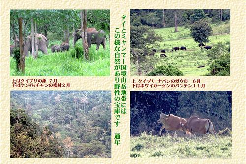22番タイとミャンマー国境山岳地帯