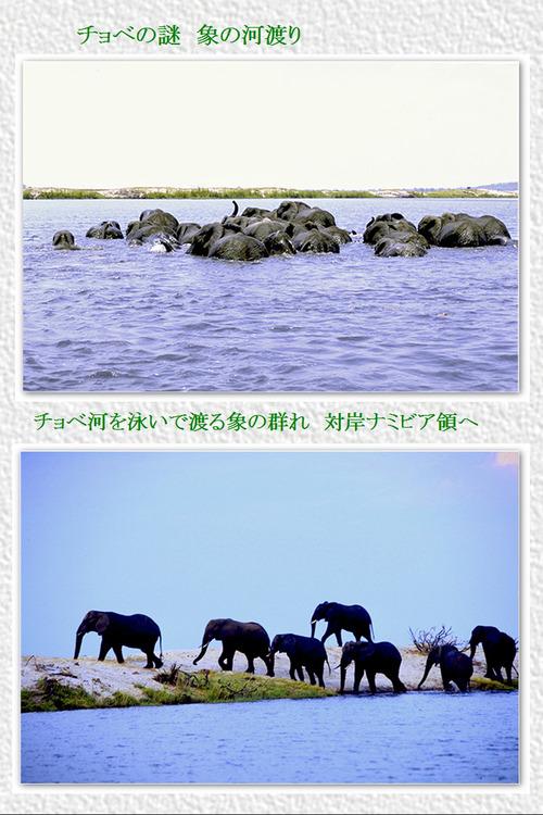 6 チョベの謎 象の河渡り