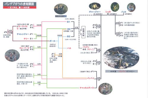 バンディブ虎の系図