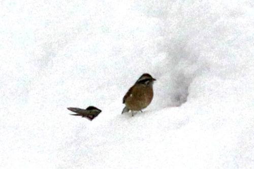 IMG_5575 ホホジロ雪穴 ブログ