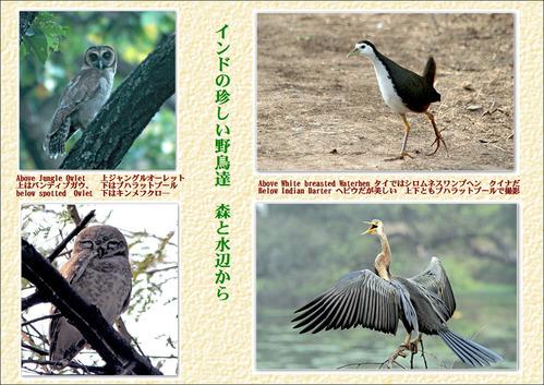 インドの珍しい野鳥たち