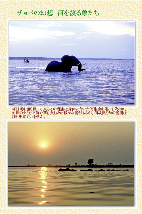 9 チョベの幻想 河を渡る象たち