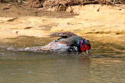IMG_0890 蛇と水中で戦うオス