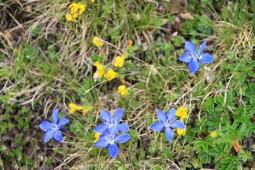 スイス 高嶺の花