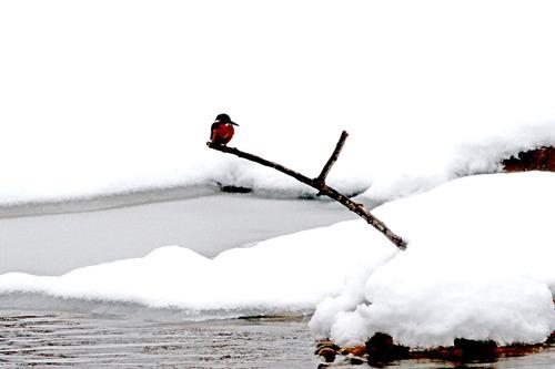 IMG_5734 雪の第4池 ブログ
