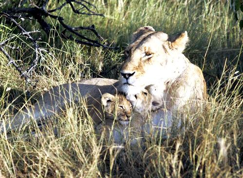 ライオン母子密着