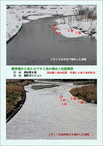 カワセミ池増水3月11日