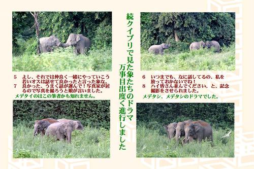 3番続象たちのドラマ
