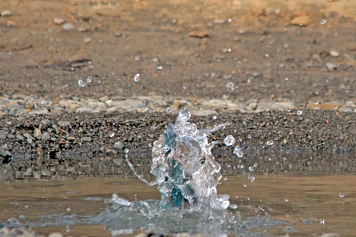 IMG_1319 水から