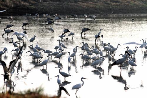 7番IMG_6191 夜明けの湿地