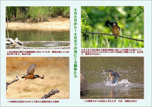 6月8日から18日までの池に来た個体
