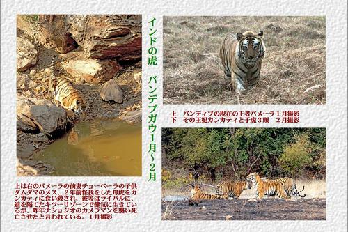 5番インドの虎