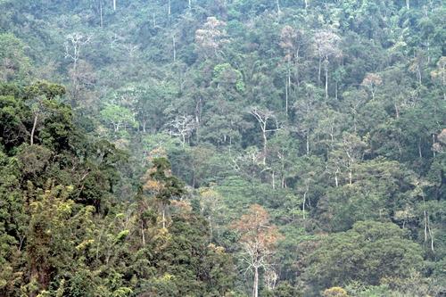IMG_2776 ケーンクラッチャンの密林