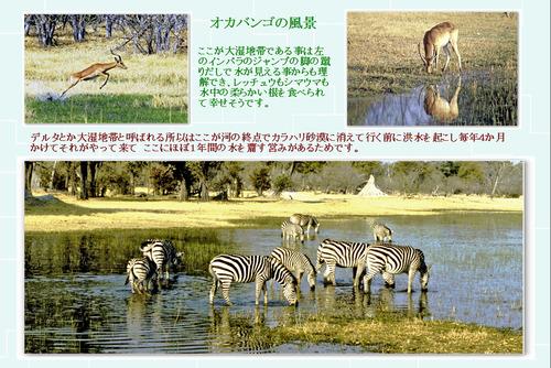 16 オカバンゴの風景