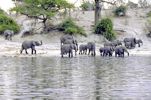 1 IMG0036チョベの象