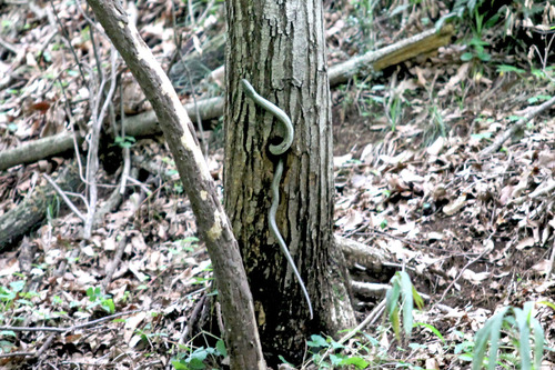 IMG_6935 蛇巣穴へ