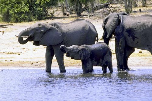 2 IMG0037 チョベの象