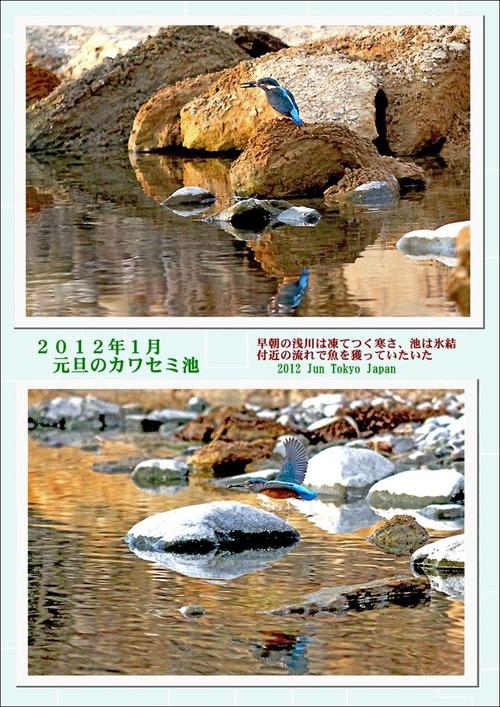1月元旦のカワセミ池